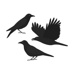 Crows.The black birds