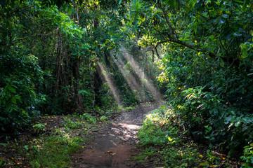 Indonesien, Java Timur, Kabupaten Banyuwangi, Meru Betiri Nationalpark, Sonnenstrahlen auf einen Pfad im Dschungel am Strand