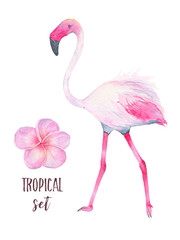 Watercolor hand painted tropical pink flamingo and frangipani flower isolated on white background
