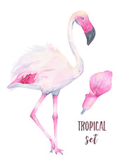 Watercolor hand painted tropical pink flamingo and calla lily flower isolated on white background