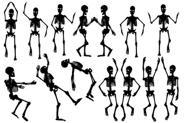 Human Skeleton / Silhouette of skeleton on white background.