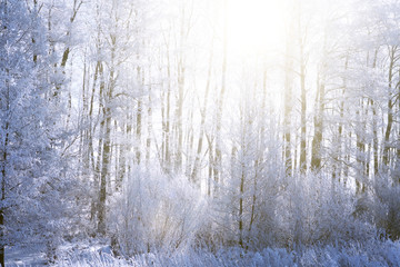 Sunset in winter forest. Snow on the tree branches. Frozen branch of a tree in a blue sky