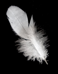 bird feather isolated on background
