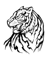Hand drawn japanese traditional tiger illustration