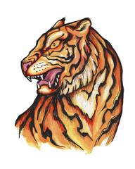 Hand drawn japanese traditional tiger illustration