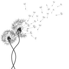 Dandelions flower. Vector abstract dandelions for background design. Vector Illustration of Dandelion for greeting card. Flying Dandelion black. Abstract dandelion background