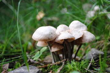 viele kleine weisse Pilze