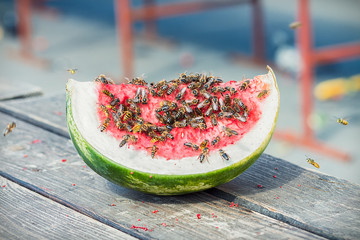 Watermelon slice covered with wasps and bees, outside on a wooden table on a sunny summer day