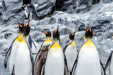 Located in the very north of Japan, Asahiyama Zoo is home to 700 animals of 124 different species. The zoo located at Asahikawa City was also one of the first to organize penguin walks in winter.