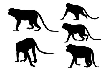 Silhouette image of monkeys on white background.