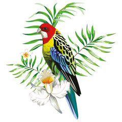 Wall Mural - Multicolor parrot with tropical plants and flowers white background