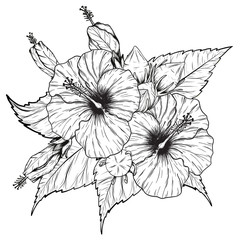 Hibiscus flower vector by hand drawing.Flower set on white background
