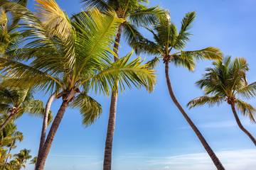Fototapete - Palms on the Smathers beach - Key West, Florida