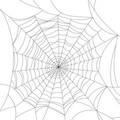Spider web isolated on white, vector illustration