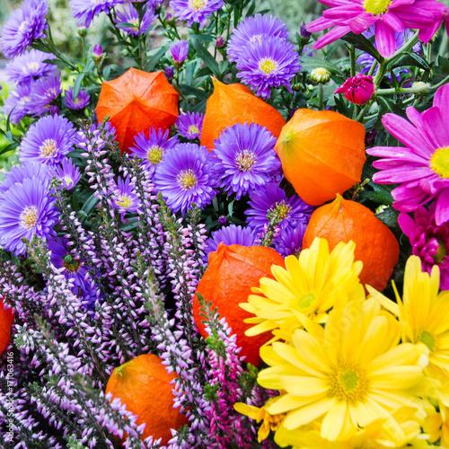 Blumen im garten  Blumen - Garten