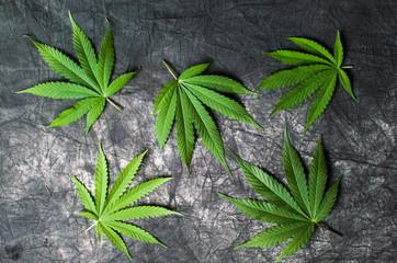 Marijuana leafs on dark textured background