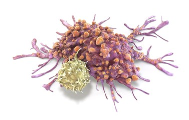 T lymphocyte and cancer cell
