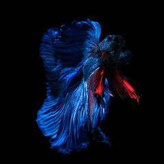 Foto op Plexiglas Vissen long skirt