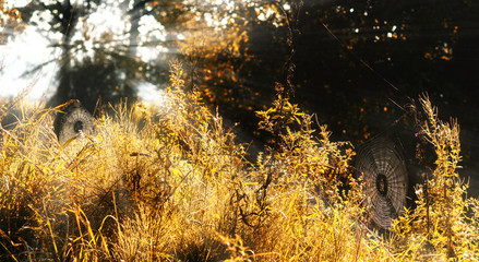 spider nets on an autumn meadow at the forest in the morning light with sunrays, halloween or nature background, copy space