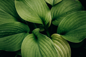 Tropical green leaves layout
