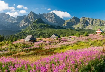 Fototapeten Gebirge Tatra mountains, Poland landscape, colorful flowers and cottages in Gasienicowa valley (Hala Gasienicowa), summer