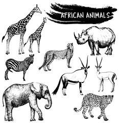 Hand drawn sketch set of African animals - giraffe, zebra, elephant, cheetah, oryx, leopard, gazelle and rhino. Vector illustration isolated on white background.