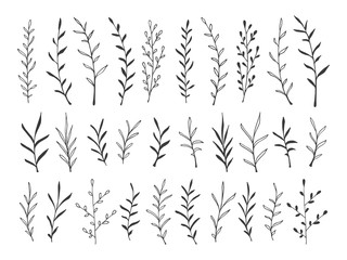 hand drawn botanical decorative design elements