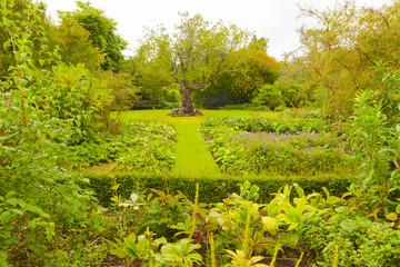 Crathes gardens scotland in summer