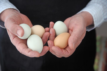 A man in a black apron holds several Araucana eggs with room for text