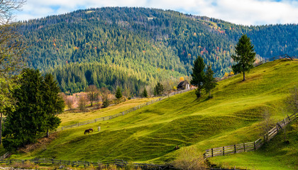 spruce trees on grassy hills in autumn mountains. lovely sunny afternoon in rural area