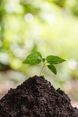 Seedlings on the soil Blurred Background Bokeh nature Nature and Environment Conservation Concepts