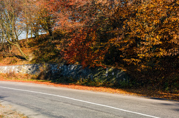 road through the forest with red foliage. beautiful autumn weather