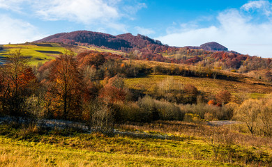 late autumn countryside landscape. forest with red foliage on a beautiful sunny day in mountainous rural area