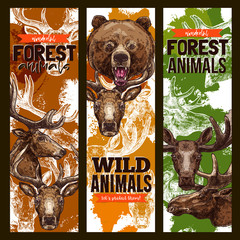 Animal sketch banner set with bear, deer and elk