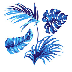 vector tropical leaves, isolated objects for use.