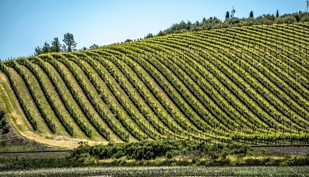 sonoma and napa valley vinyards in california