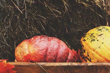 Red pumpkin in wooden box