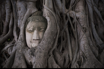 Smile Buddha head covered by tree root at wat Mahathat in Ayutthaya. Thailand