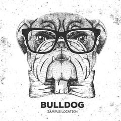 Hipster animal bulldog. Hand drawing Muzzle of animal dog