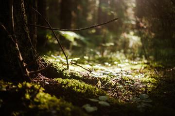 Forest blur light sun rays