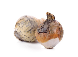 White onion rotten on a white background