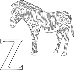 Vector hand drawn illustration capital letter Z on alphabet card. Black and white realistic zebra isolated. Kids ABC, school education. Coloring page for children.
