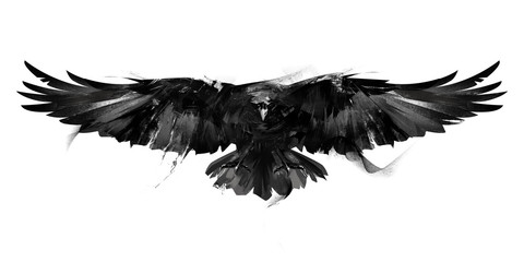isolated black and white illustration of a flying bird crow front