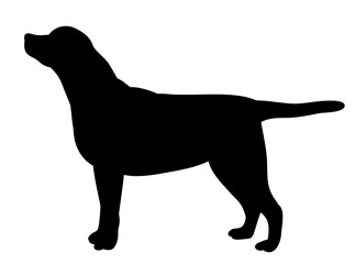 vector, isolated silhouette dog