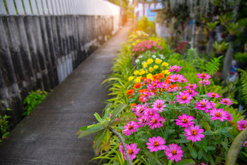 Colorful flowers fence of local house with cement sidewalk in small community.