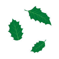 vector flat cartoon style holly tree, mistletoe or ilex leaves set. Isolated illustration on a white background. Christmas cards, banners of presentation decoration design symbol