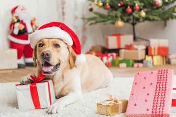 Lovely dog is resting on white rug