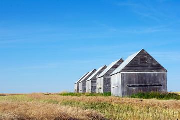 Five barns in field in rural Alberta