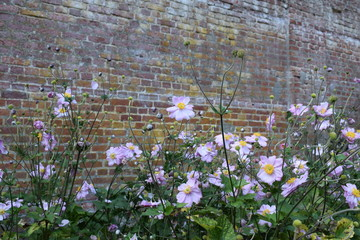 Purple flowers and brick wall