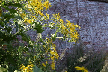 Yellow flowers and brick wall